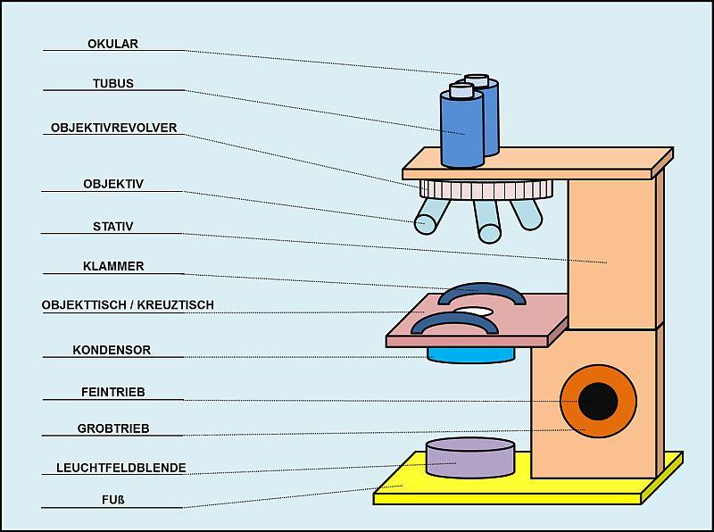 aufbau lichtmikroskop light microscope. Black Bedroom Furniture Sets. Home Design Ideas