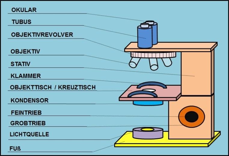 Aufbau Lichtmikroskop