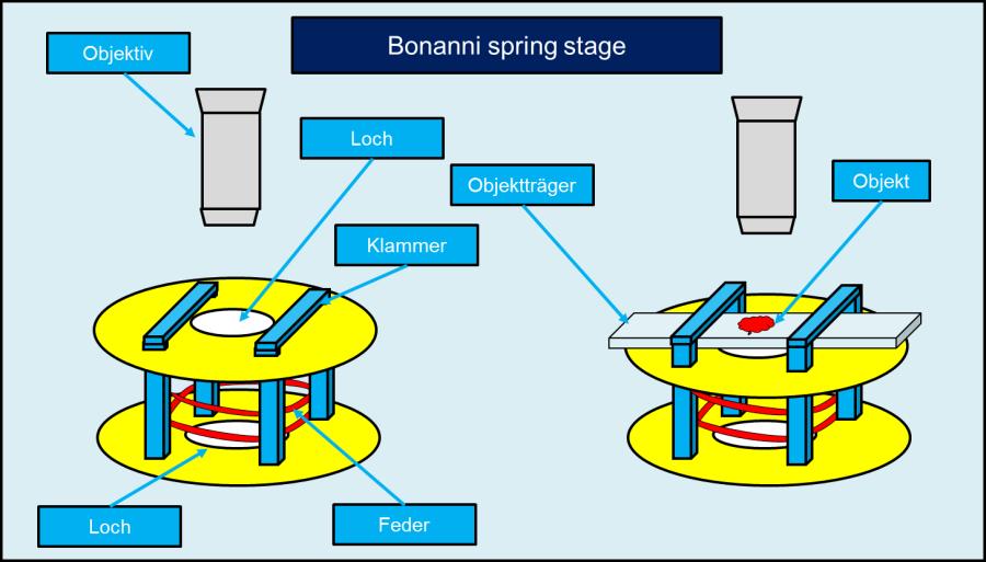Bonanni Spring Stage