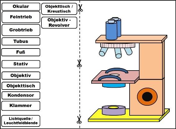 Mikroskop-Aufbau-Puzzle-PDF
