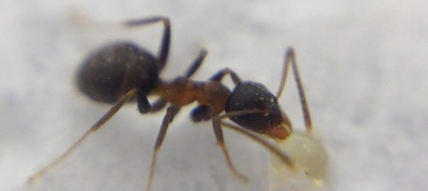 ant under the microscope